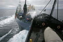 japan-halts-whale-hunt