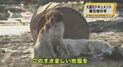 japanese-dog-refuses-to-leave-injured-friend
