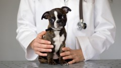 plastic-surgery-for-pets