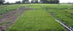 hybrid-grass-could-reduce-flooding