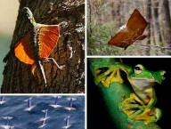 wingless-flying-animals