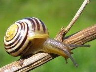 snail-genes-reveal-human-migration
