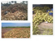 coconut-fired-biopower-plant