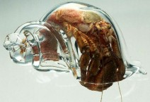 artificial-home-for-hermit-crab
