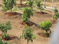 pakistani-soldier-plant-trees-record