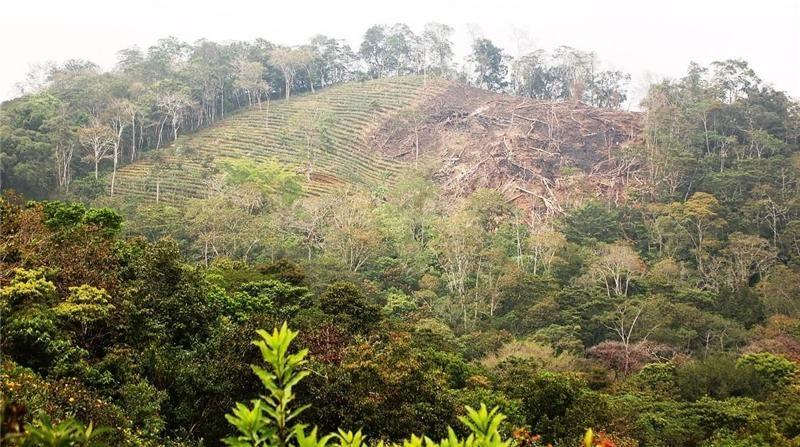 Пример подсечно-огневого земледелия в тропических лесах Ocuilapa, Мексика