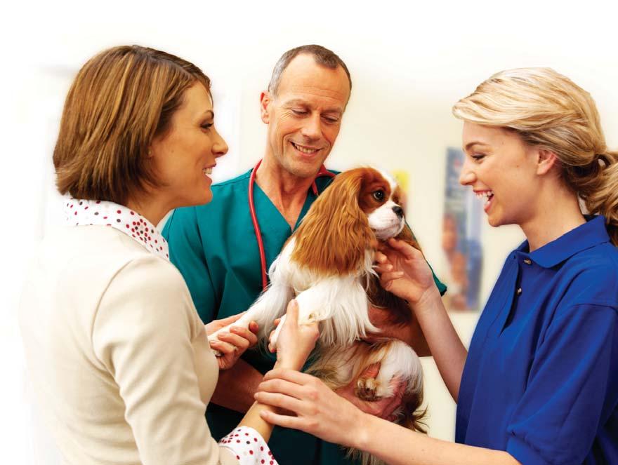 Собаки станут помощниками врачей