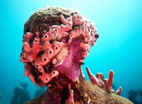 Искуственный коралловый риф