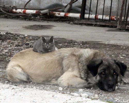 16 примеров необычной дружбы животных