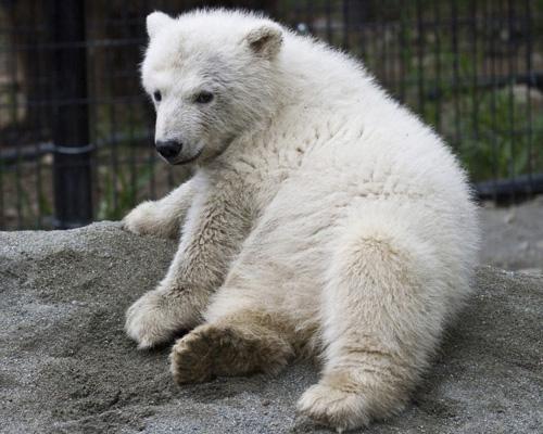 Чудесные спасенные детеныши животных (фото и видео)