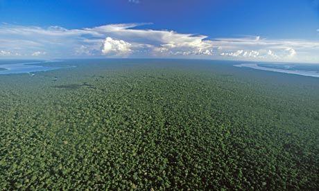 Вид с воздуха на дождевые леса Амазонии