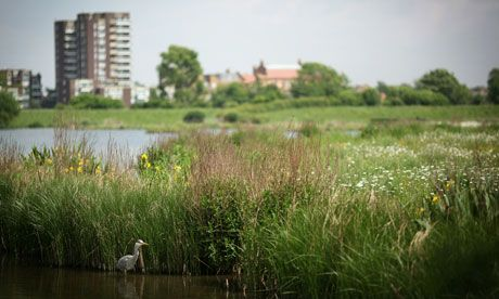 The London Wetlands Centre.