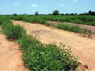 Посадка деревьев на деградированных землях Африки
