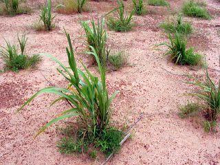 Восстановление деградированных земель в Африке