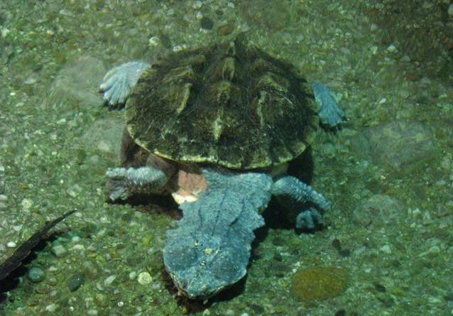 10 животных, которых можно встретить только в дождевых лесах