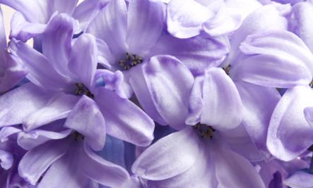 10 обычных цветов, которые следует употреблять в пищу