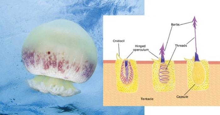 Шесть экстравагантных методов питания из глубин океанов