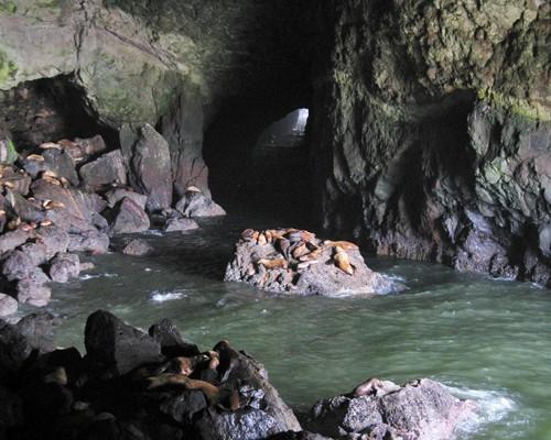 Пещеры морских львов