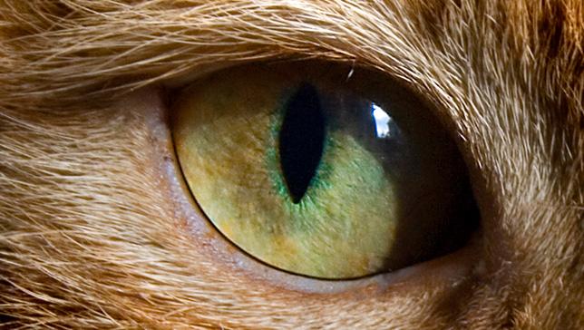 Самые милые черты вашей кошки с научной точки зрения