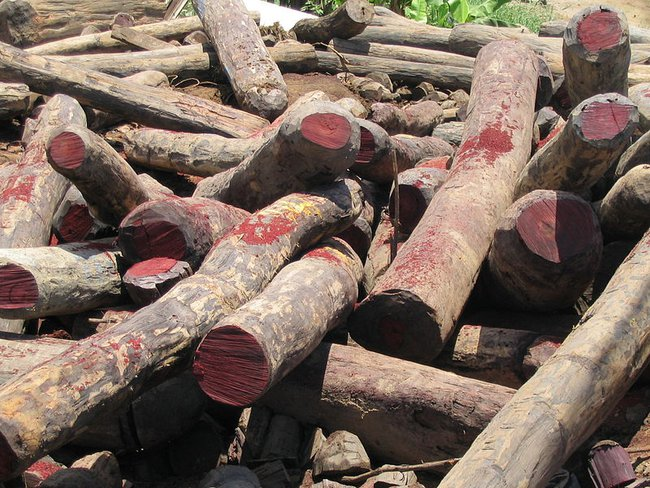 http://www.facepla.net/images/MB/2014/67/forest/Illegal_rosewood_stockpile.jpg