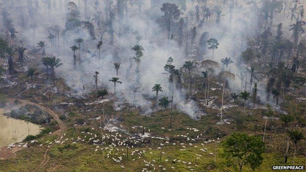 Группа обвиняется в незаконном захвате, легализации и выжигании огромных участков государственных земель.