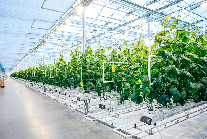 7 зеленых инноваций, которые меняют мир