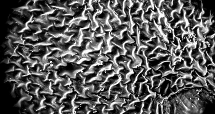 Биотехнологии: накопитель энергии по типу папоротника