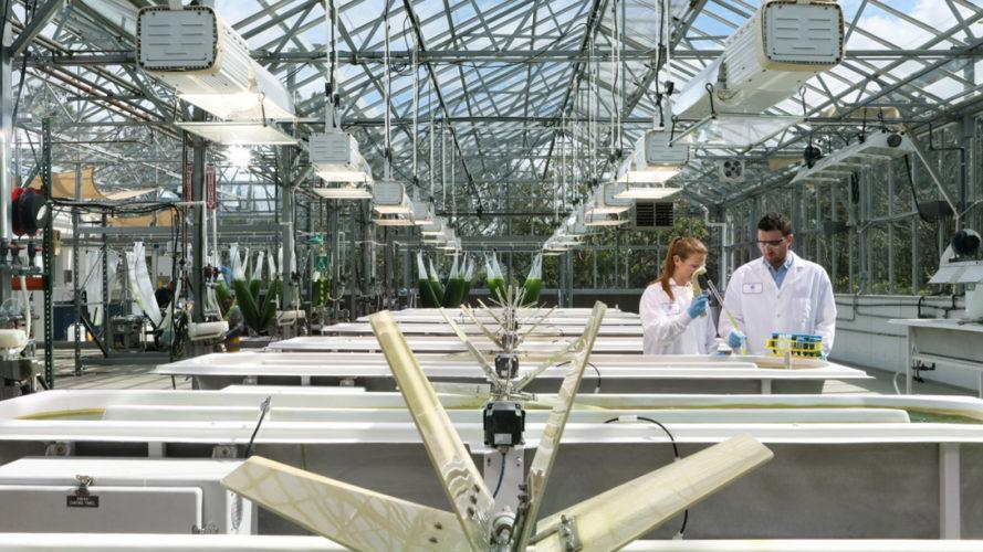 Генномодифицированные водоросли удваивают производство биотоплива