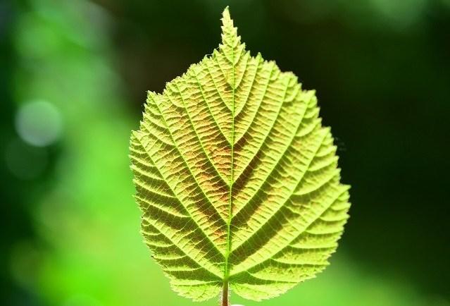 Ученые произвели водород с помощью света и растений