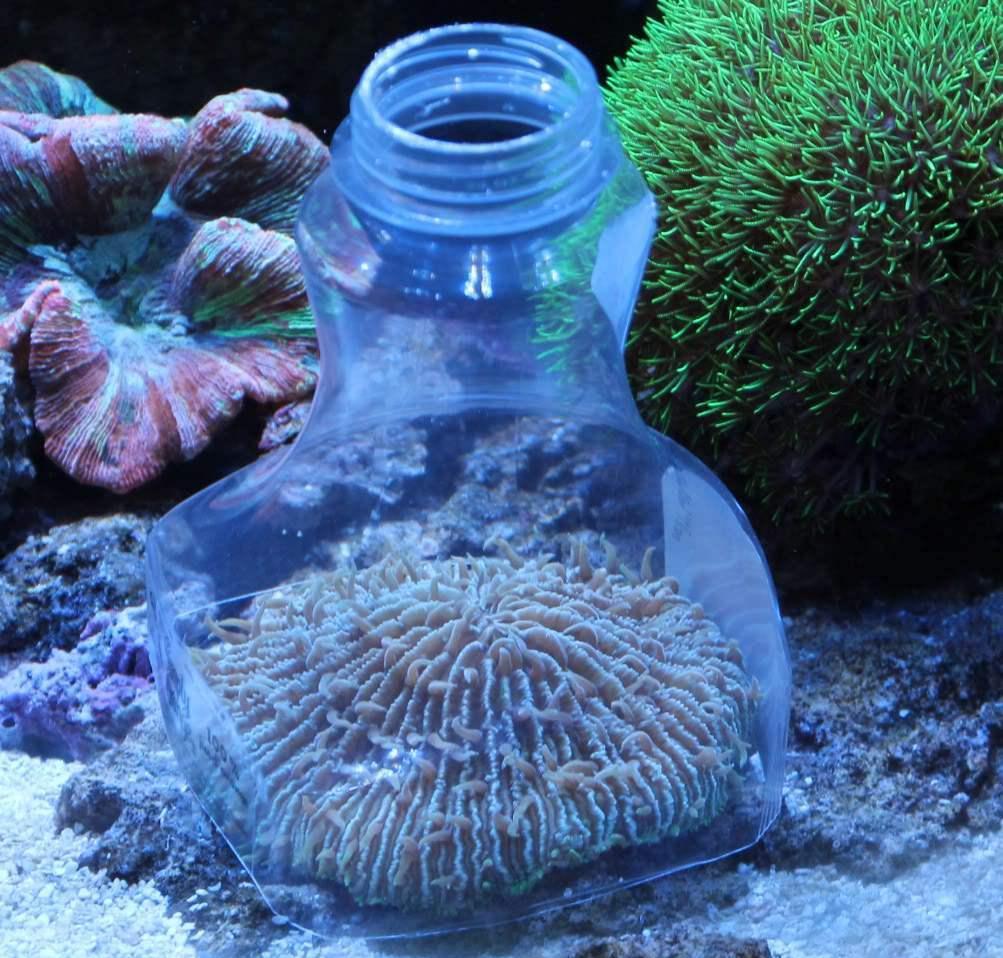 Ученые выяснили, что кораллы едят пластмассовый мусор, потому что считают его вкусным