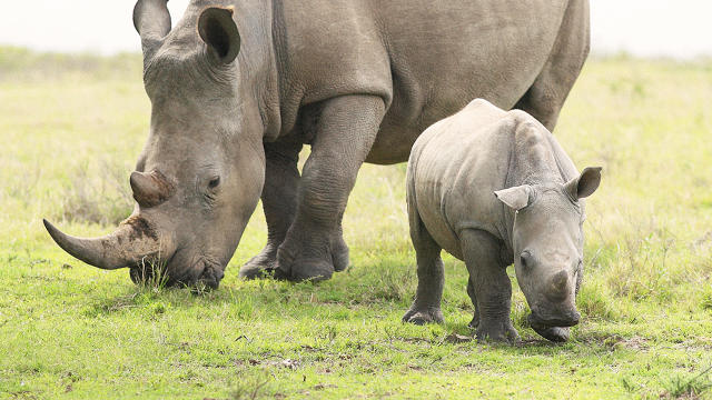 Дроны помогают защитить животных от браконьеров