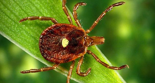 Один укус насекомого - и вы вегетарианец