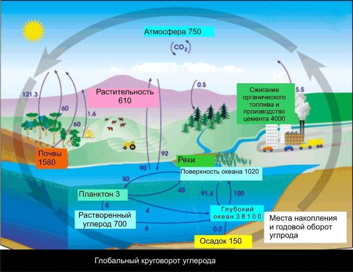 Круговорот углерода в природе,