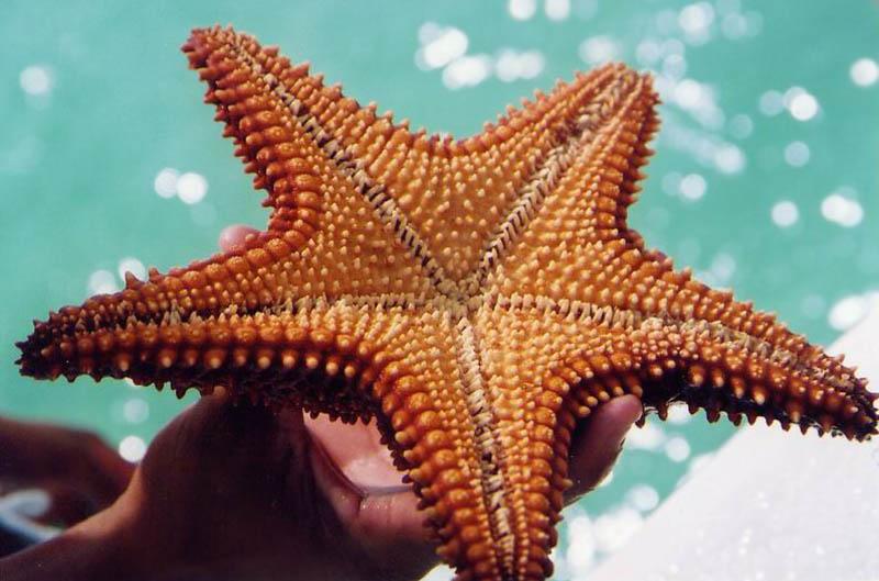 фото морских звёзд