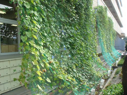 Зеленые занавески на здании начальной школы Nakajama, город Ichinomiya, Япония
