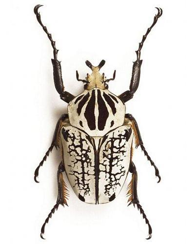 10 крупнейших насекомых мира