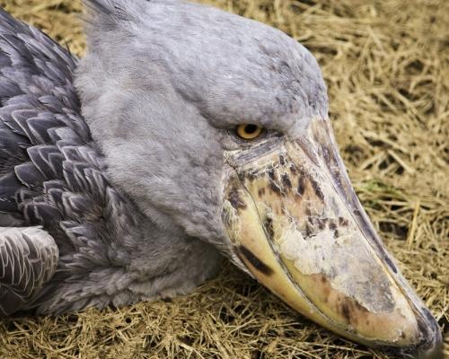 6 самых невероятных животных