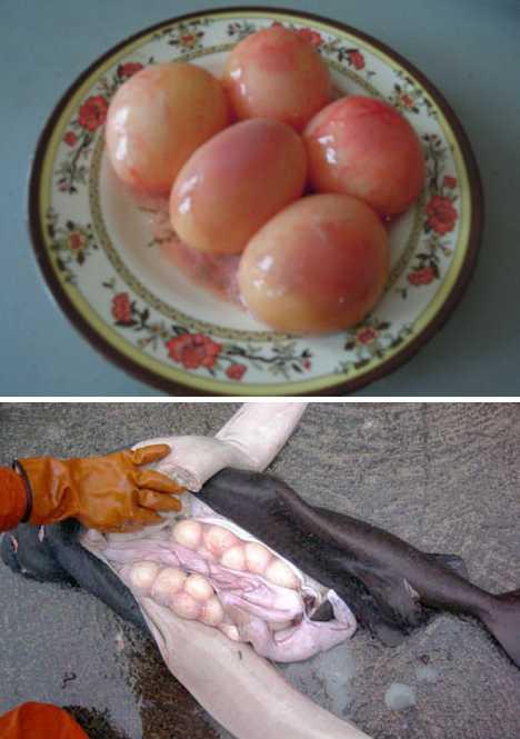 7 удивительных съедобных яиц, кроме куриных