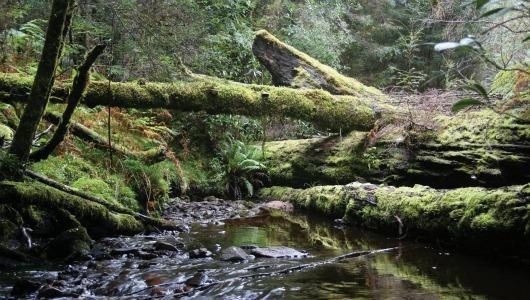 8 лучших дождевых лесов для любителей настоящего эко-туризма