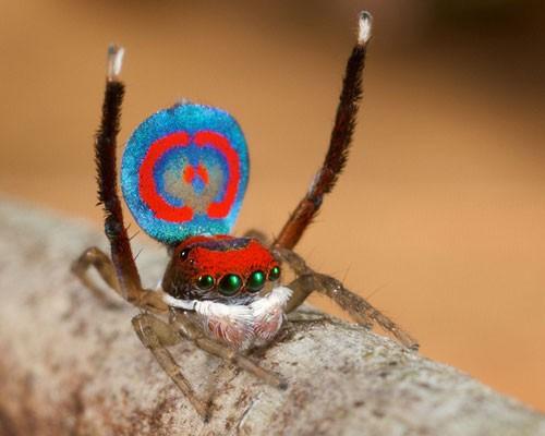 Хит-парад пауков: 8 уникальных видов