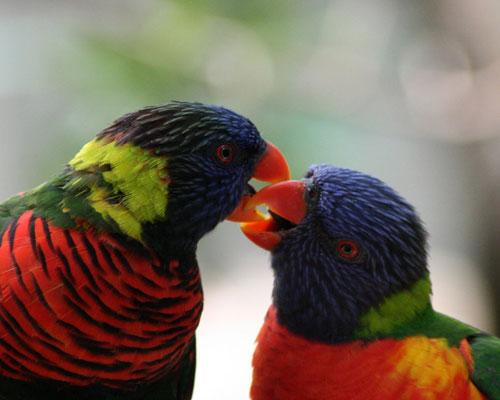 Самые удивительные брачные ритуалы в мире животных