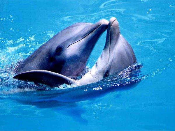 Дельфины способны «видеть» эмбрион беременной женщины