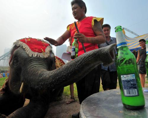 Животные-пьяницы: любители забродивших фруктов и напитков