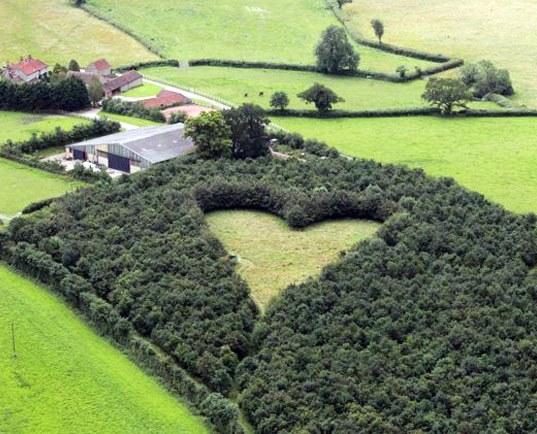 Картинки сердца живая природа