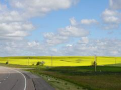 Ученые изучают пути создания сельскохозяйственных культур, которые не смогут опыляться пыльцой генетически модифицированных растени