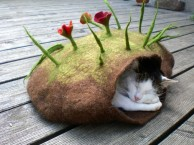 cat-eco-homes