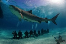 ecotourism-for-sharks