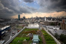 new-york-green-roofs