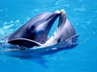 can-dolphins-detect-pregnant-women