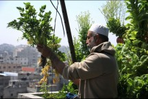 urban-aquaponics-farming-in-gaza